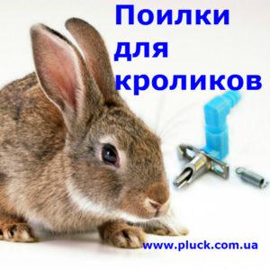 Poilki_kroliki_menu